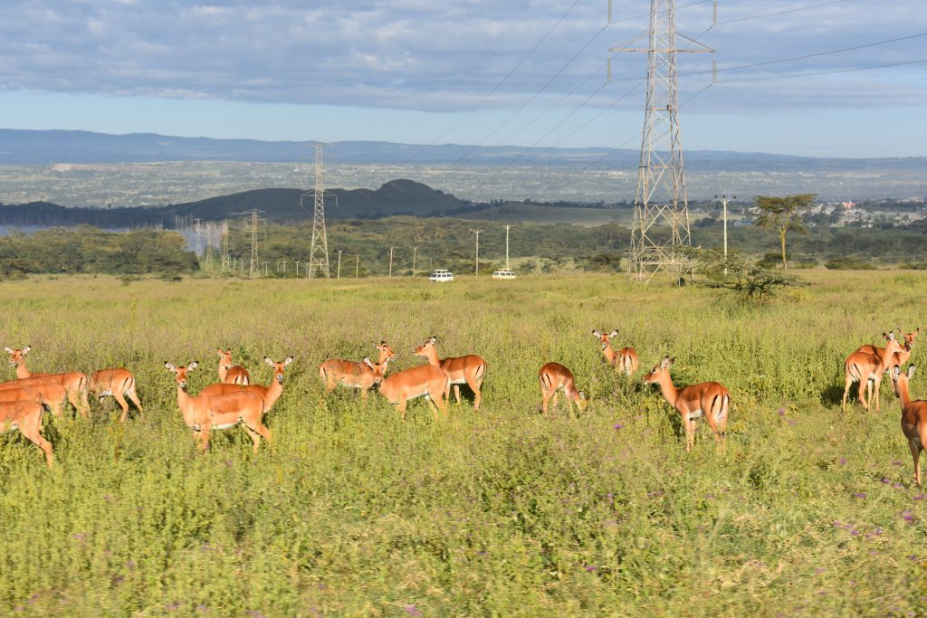 safari nel lake nakuru-animali