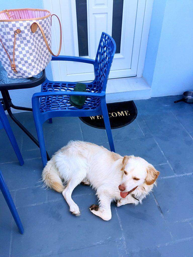 cane-nel-patio-appartamento