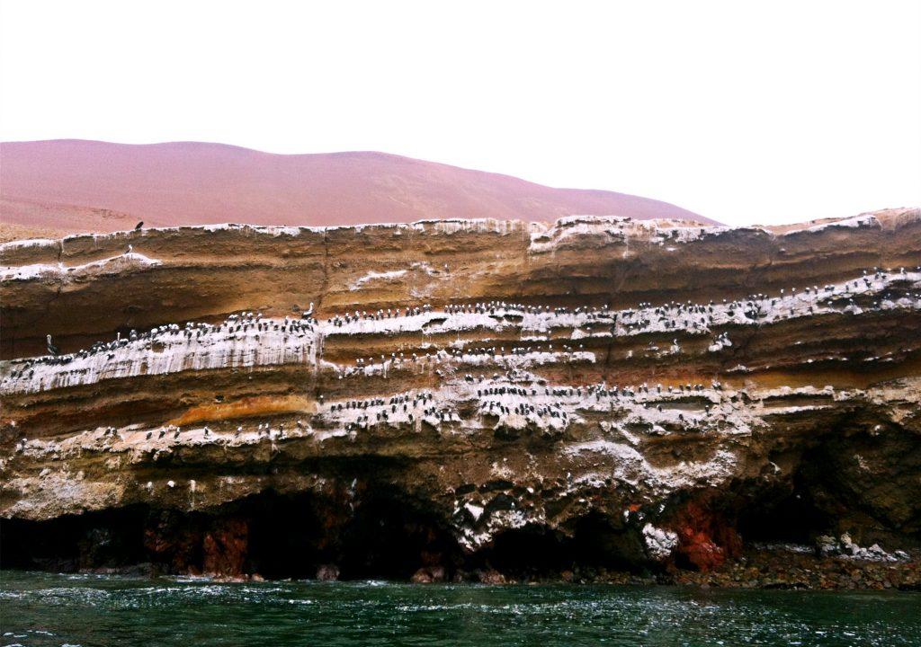 riserva di paracas-isole ballestas