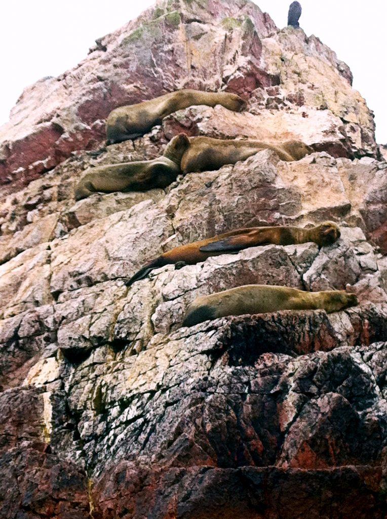 foche-riserva-di-paracas