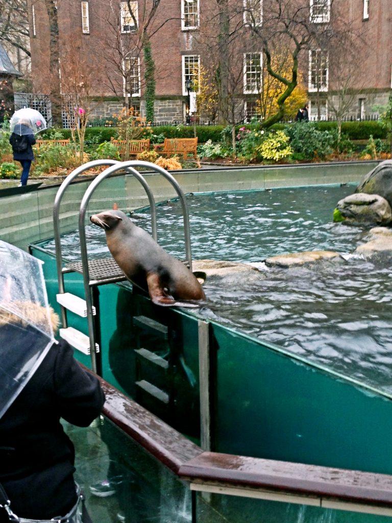 le 10 cose da fare a New York a Natale-zoo-central-park