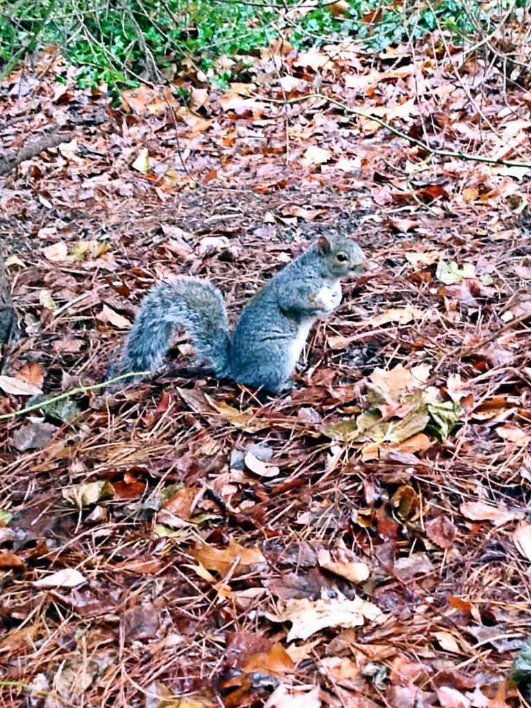 le 10 cose da fare a New York a Natale-scoiattolo