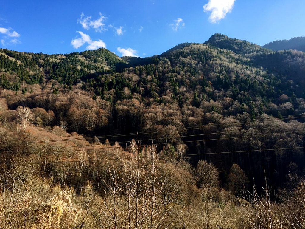 monastero di rila-bosco