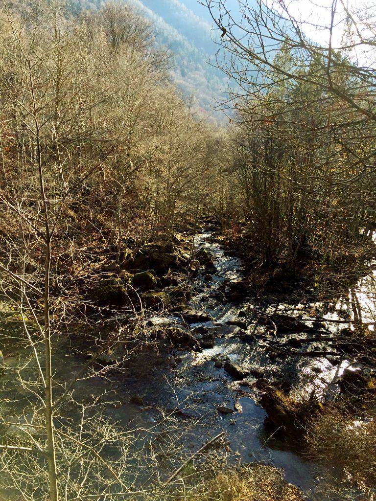 monastero di rila-bosco-monastero