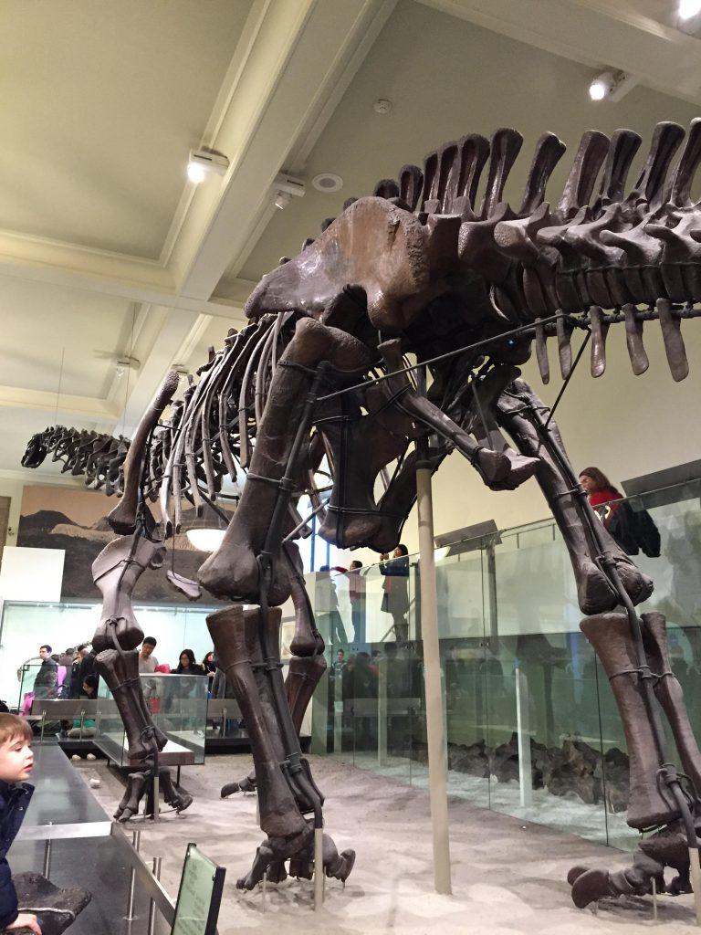 musei gratis a new york-diplodoco-museum-of-natural-history