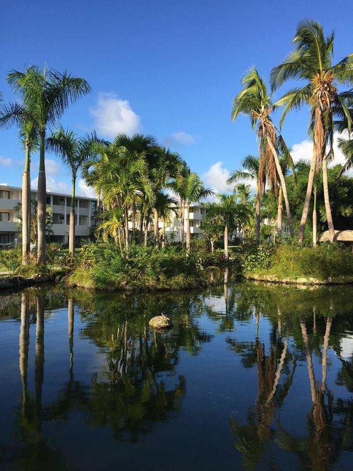 Catalonia Bavaro Resort a Punta Cana-oasi