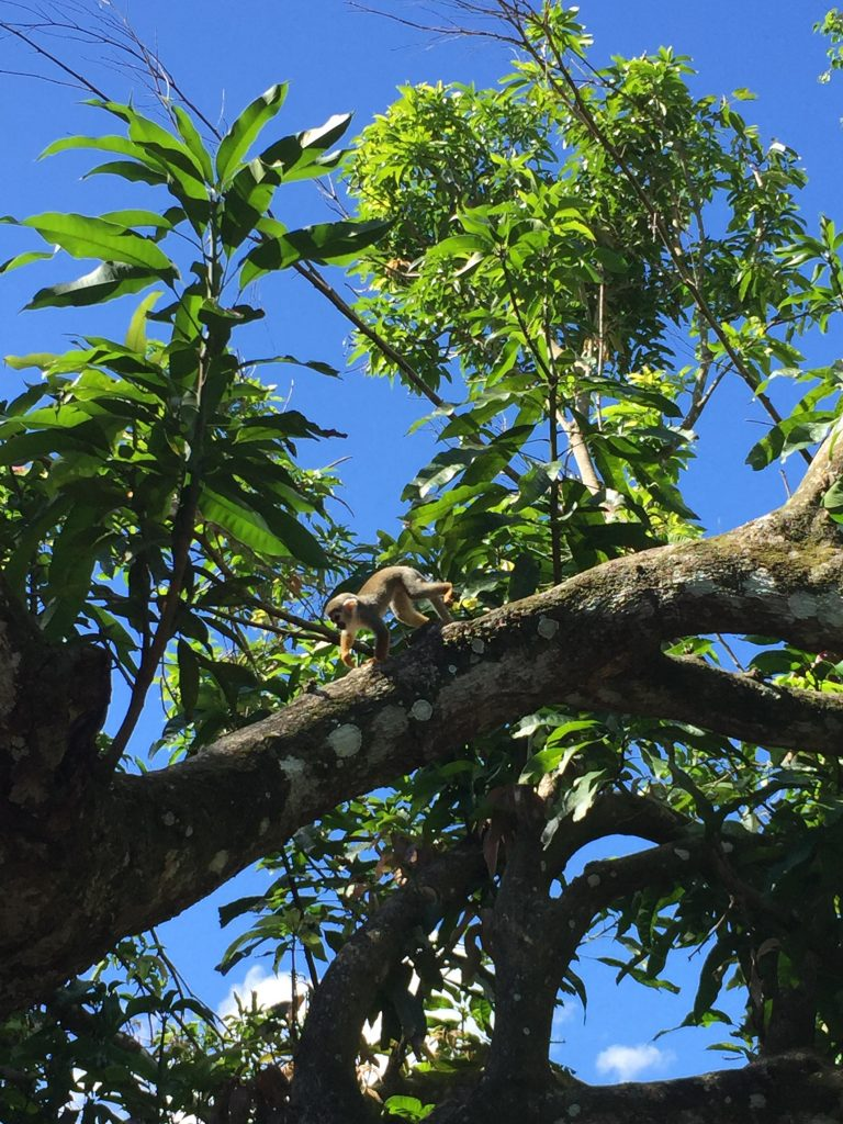 monkeyland a punta cana-squirrel-monkeys-monkeyland