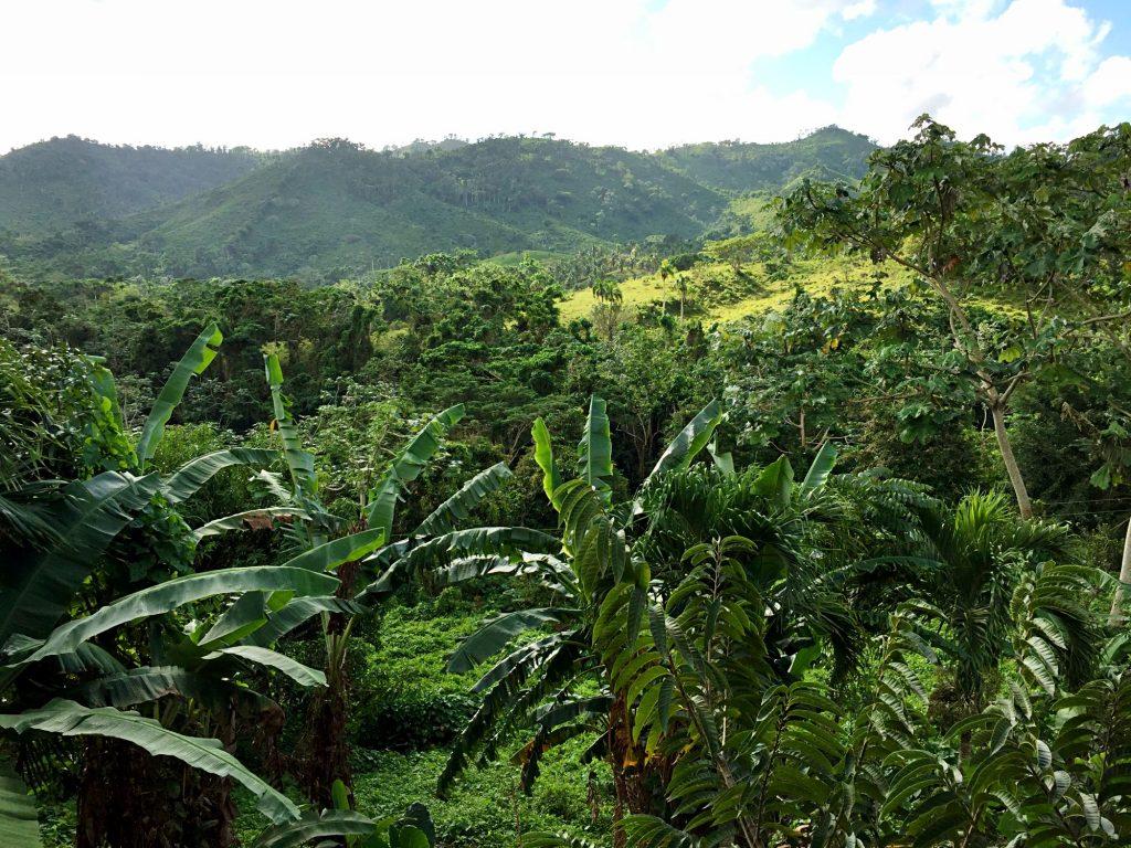 monkeyland a punta cana-foresta-punta-cana
