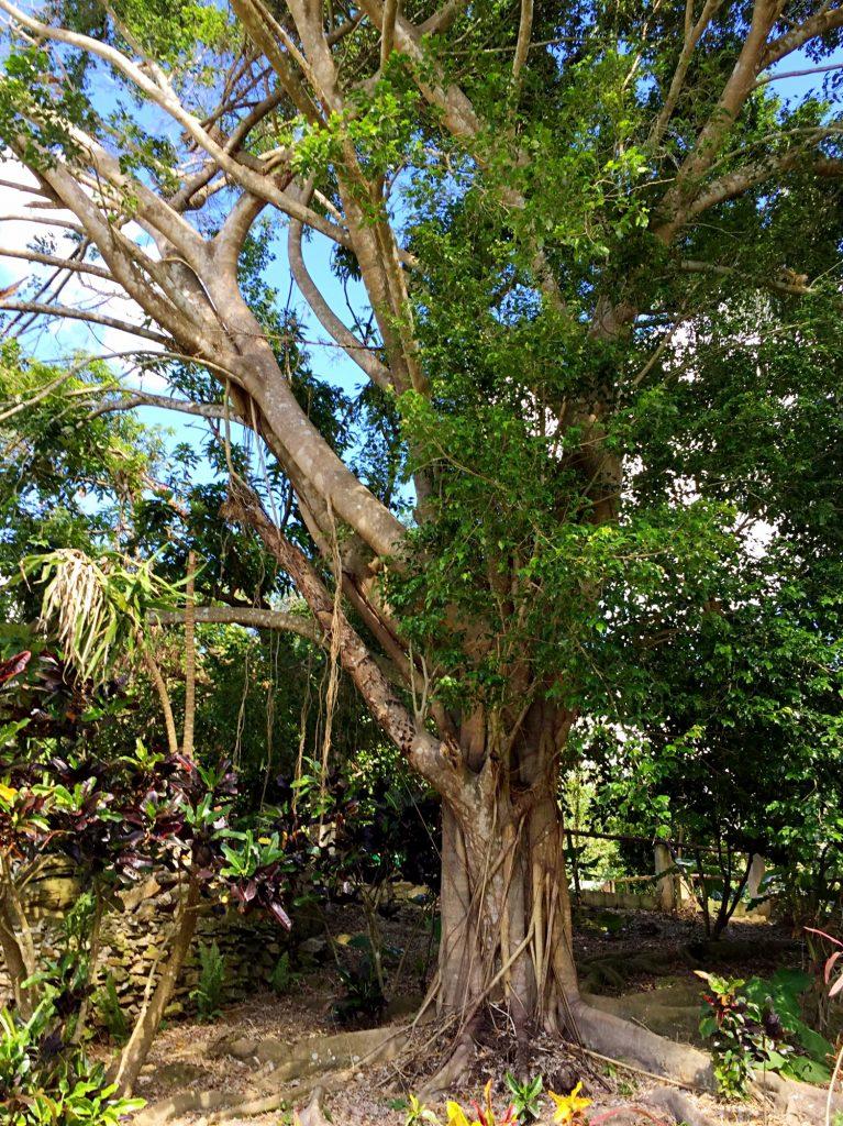 monkeyland a punta cana-vegetazione-monkeyland
