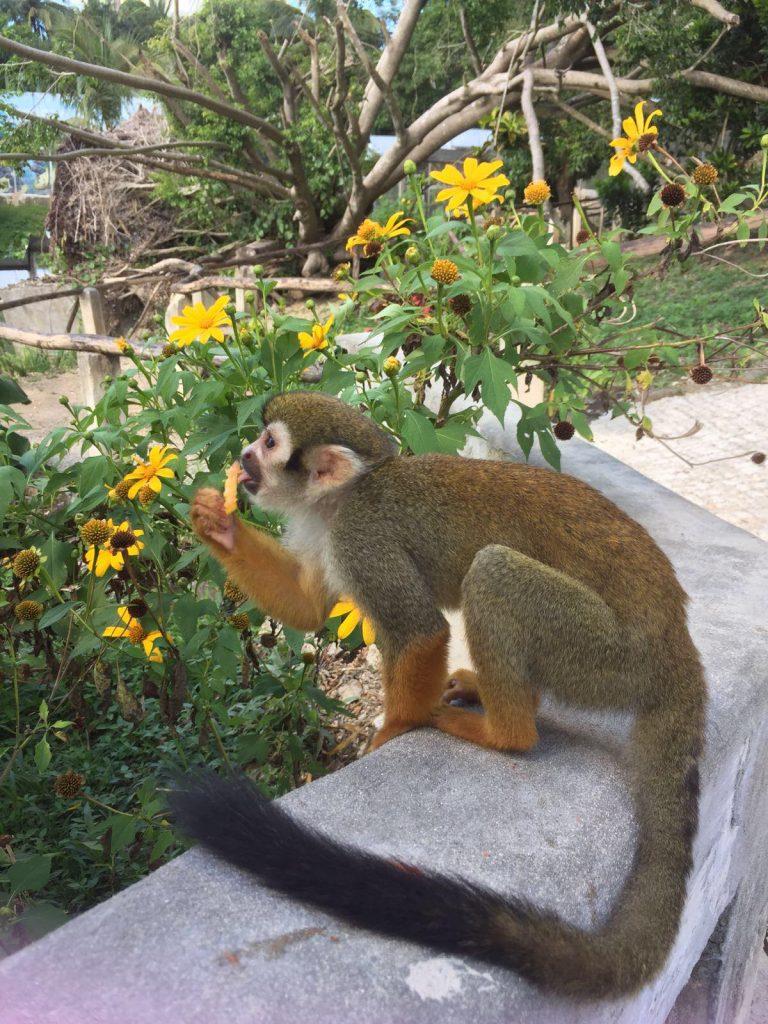 monkeyland a punta cana-scimmietta-monkeyland