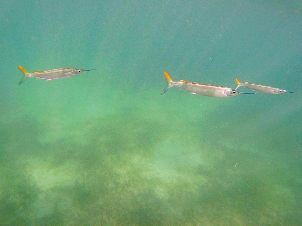 snorkeling a punta cana-aguglie