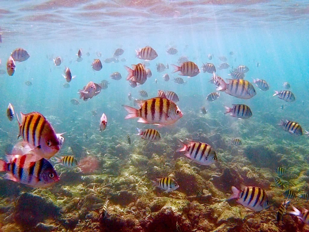 snorkeling a punta cana-pesci-striati