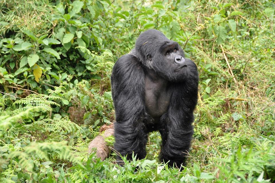 100 luoghi da vedere prima di morire-ruanda