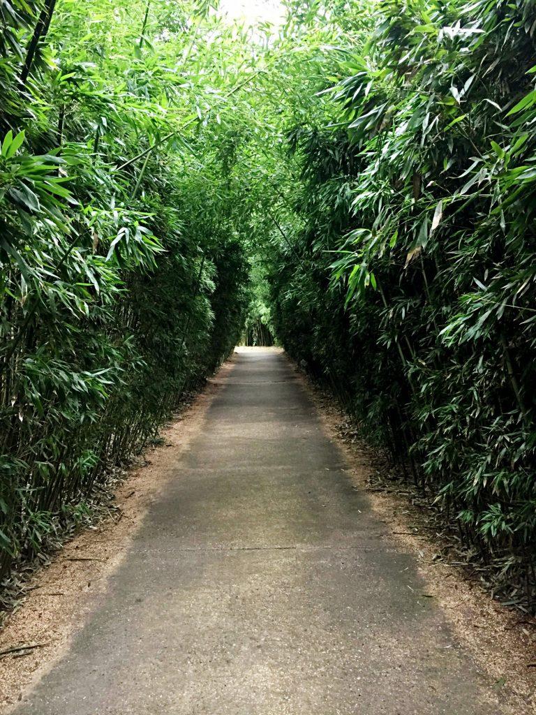 labirinto della masone-percorso