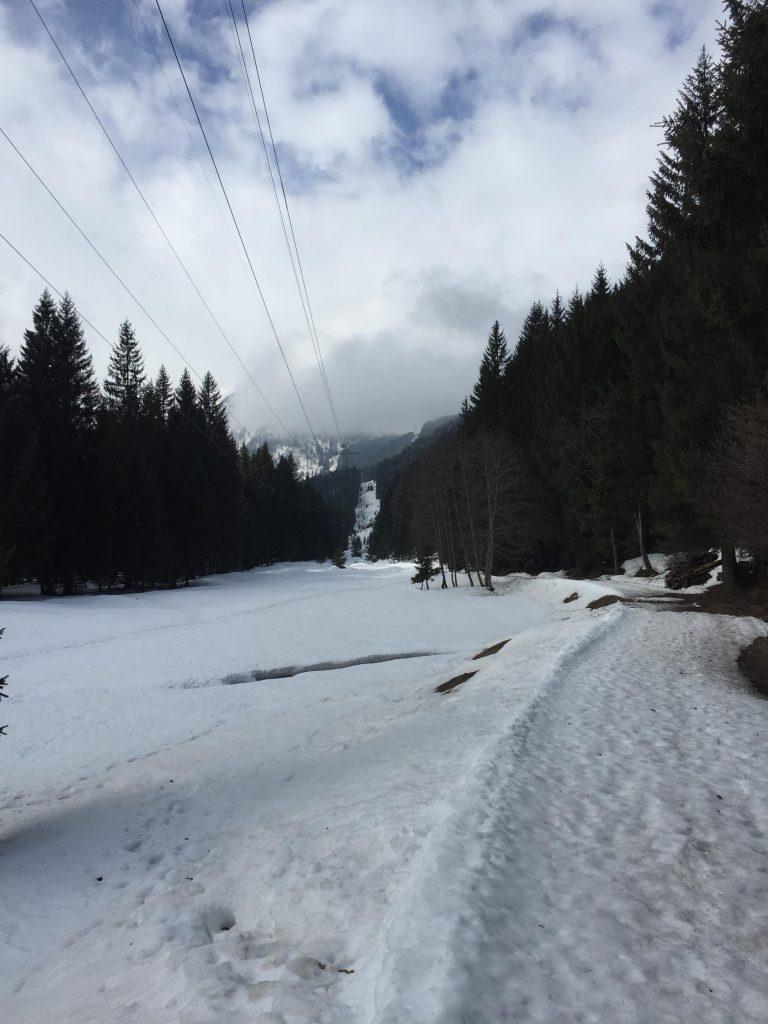 cose da fare in Val di Sole-passeggiata-nel-bosco