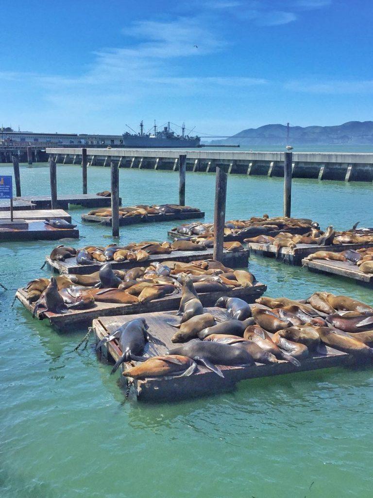 itinerario di 3 giorni a San Francisco-pier-39