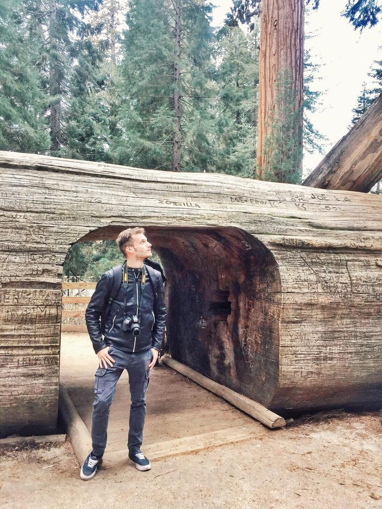 sequoia national park-tharp's-log
