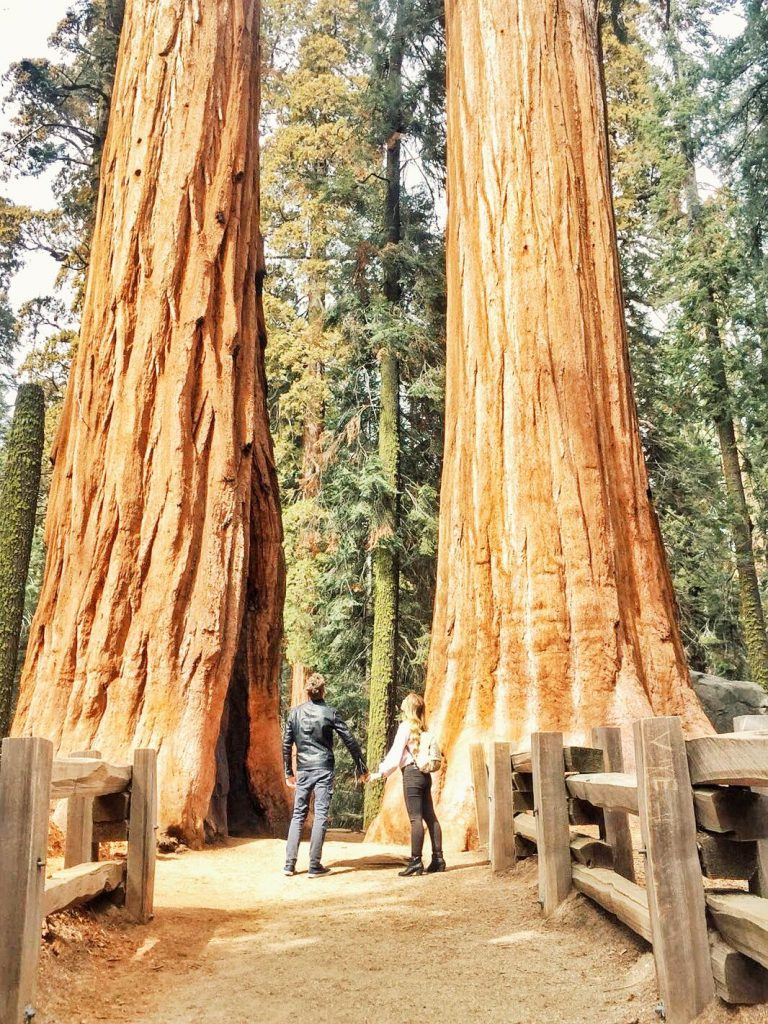 sequoia national park-twins-sequoia