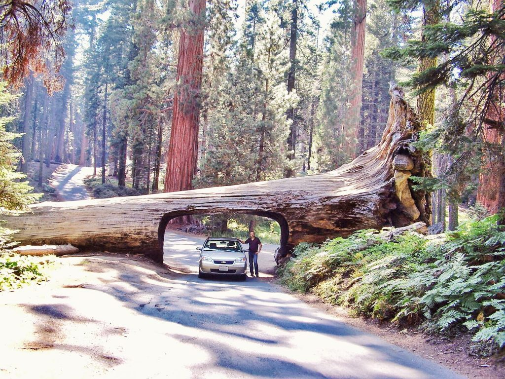 sequoia national park-tunnel-log