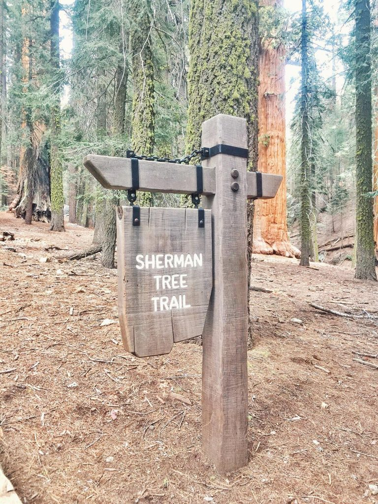 sequoia national park-sherman-tree-trail