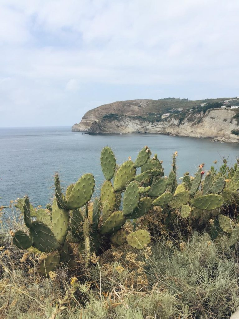 due giorni a Ischia-cactus-ischia