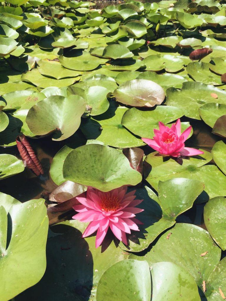due giorni a Ischia-fiori-rossi