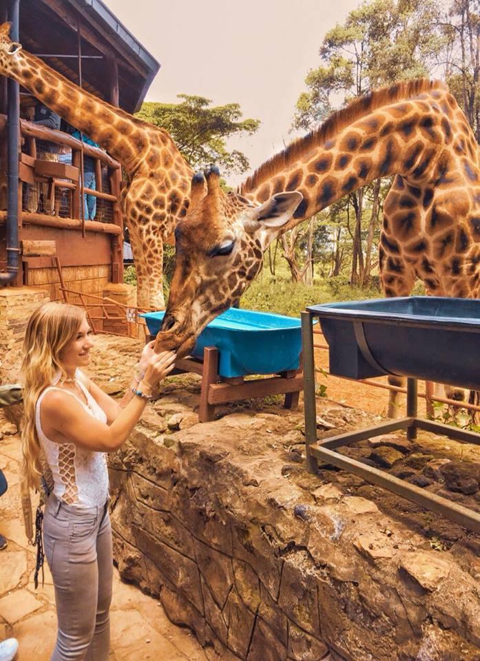 una giornata a Nairobi-giraffe-centre