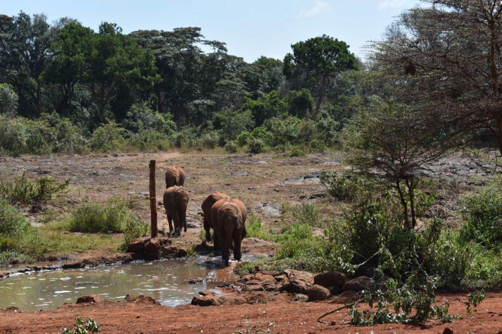 una giornata a Nairobi-orfanotrofio-elefanti
