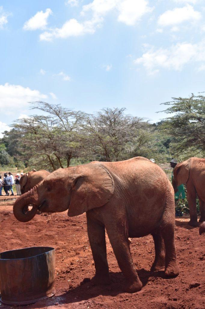 una giornata a Nairobi-cosa-fare