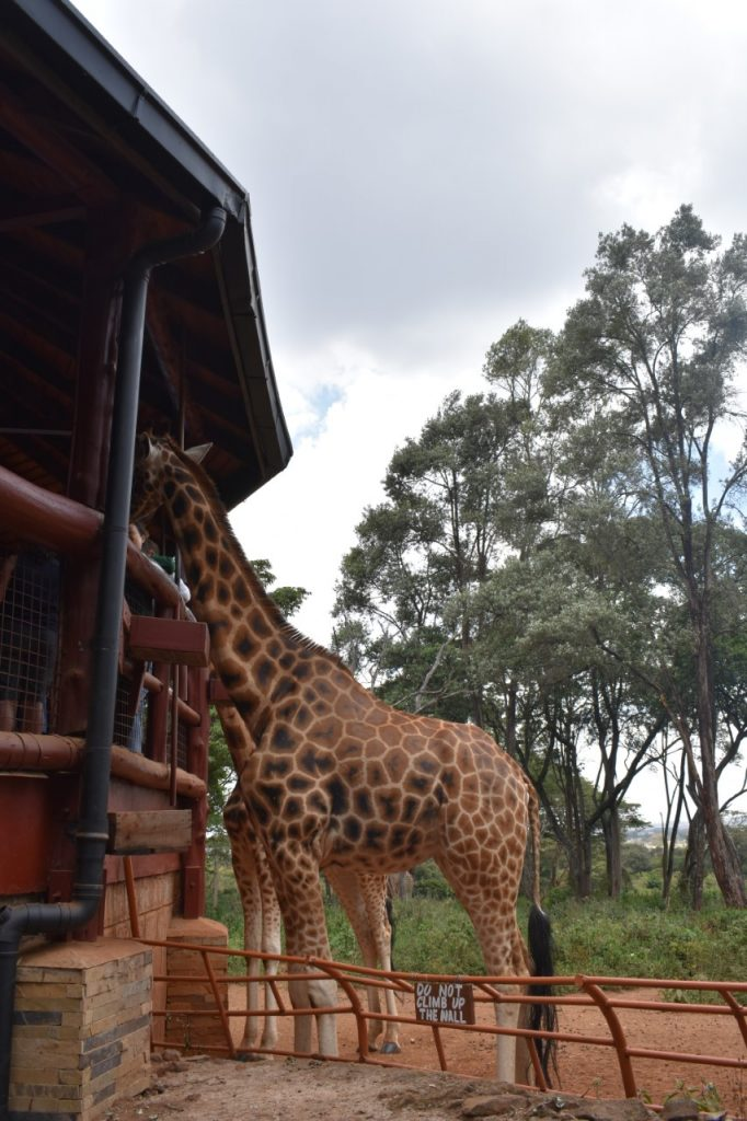 una giornata a Nairobi