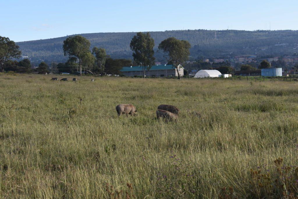 safari nel lake nakuru-facoceri