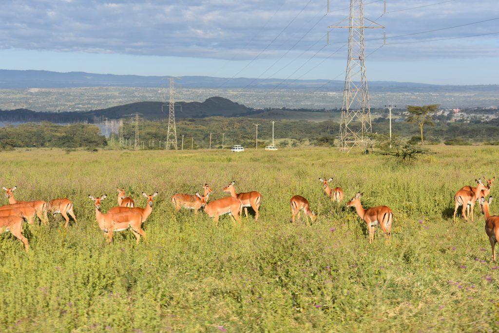 safari nel lake nakuru-animali