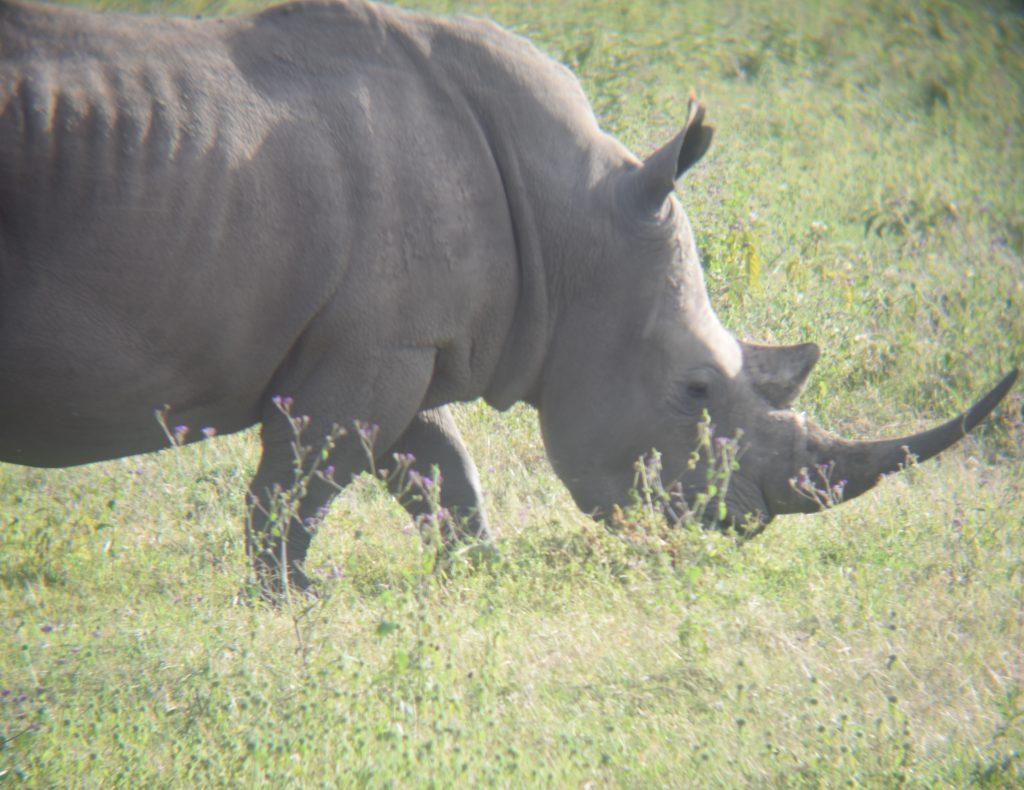 safari nel lake nakuru-rinoceronte bruca
