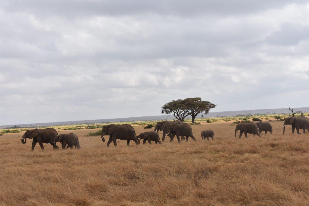 safari nell'Amboseli National Park-mandria-elefanti