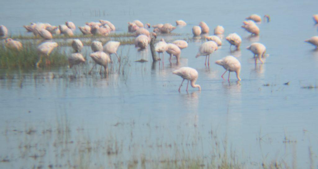 safari nel lake nakuru-fenicotteri