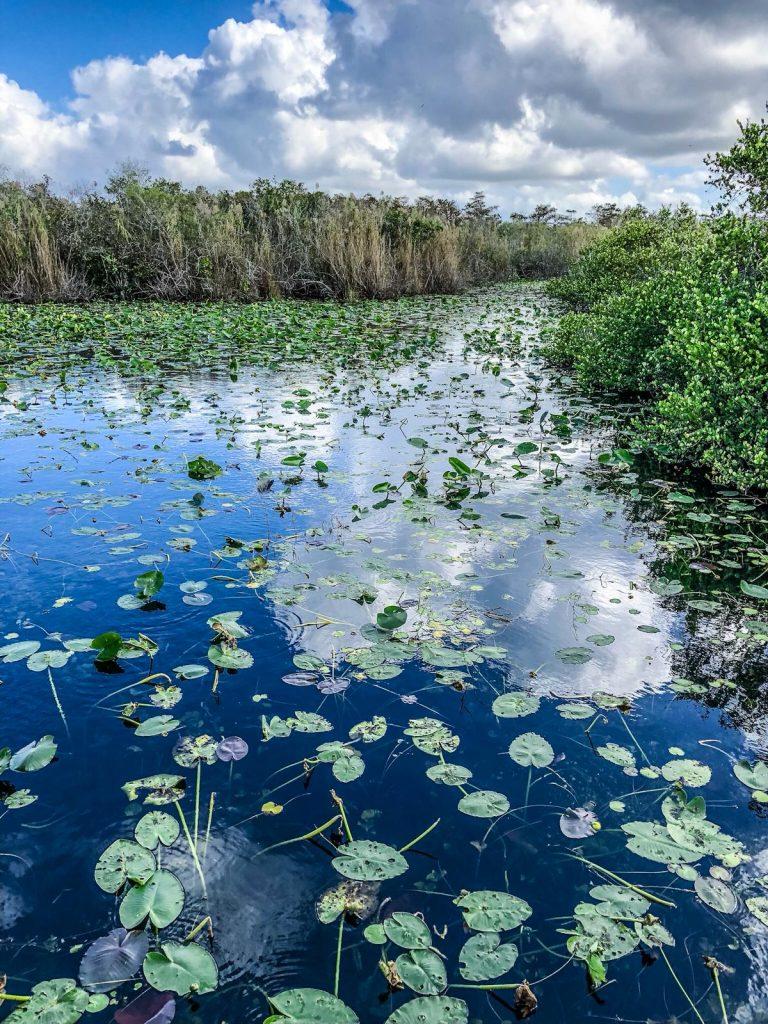 come visitare le Everglades-everglades