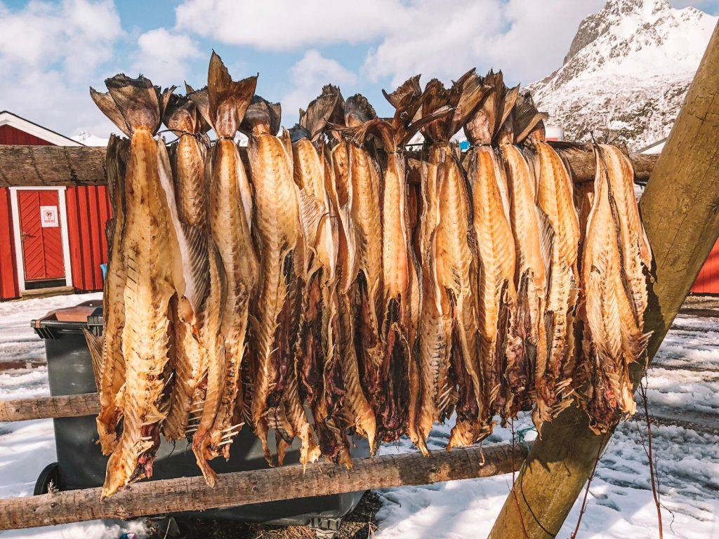 cosa fare alle Lofoten in inverno-stoccafissi