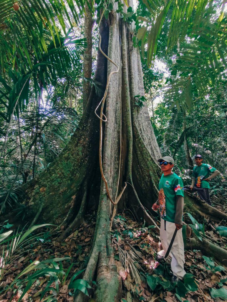 cosa fare in Amazzonia-albero-campana