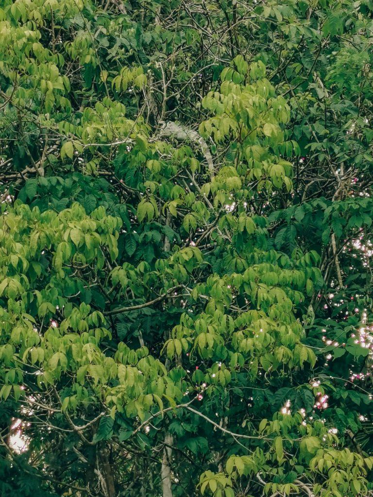 come organizzare un viaggio in Amazzonia-lucertola