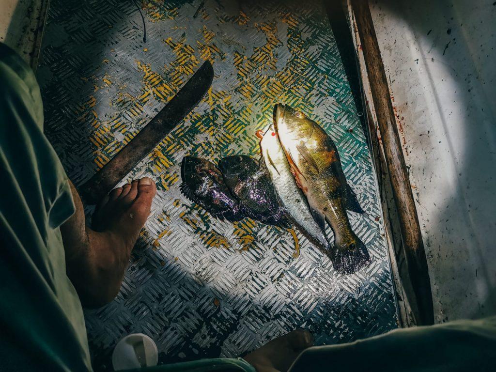 cosa fare in Amazzonia-pesca-notturna