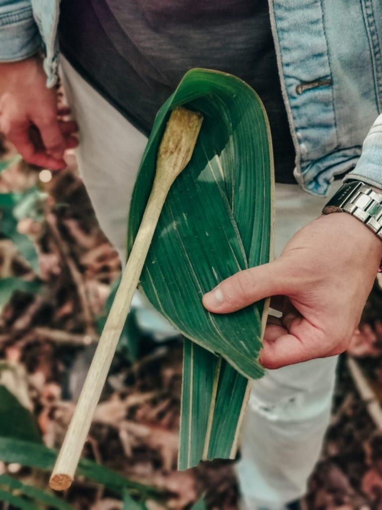 cosa fare in Amazzonia-piatti