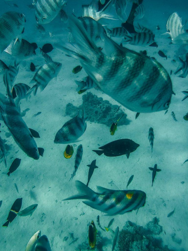 cosa fare a Hurghada-pesci