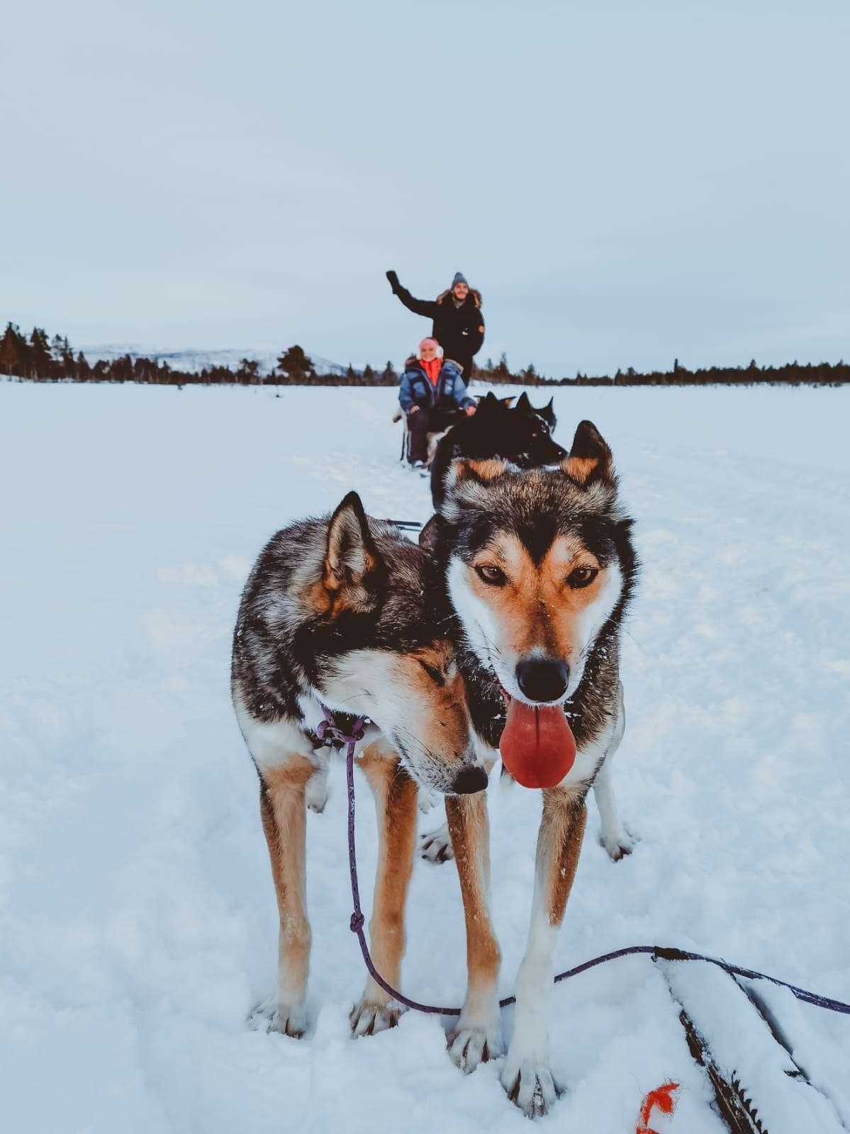 cosa fare in Lapponia svedese in inverno-husky-tour
