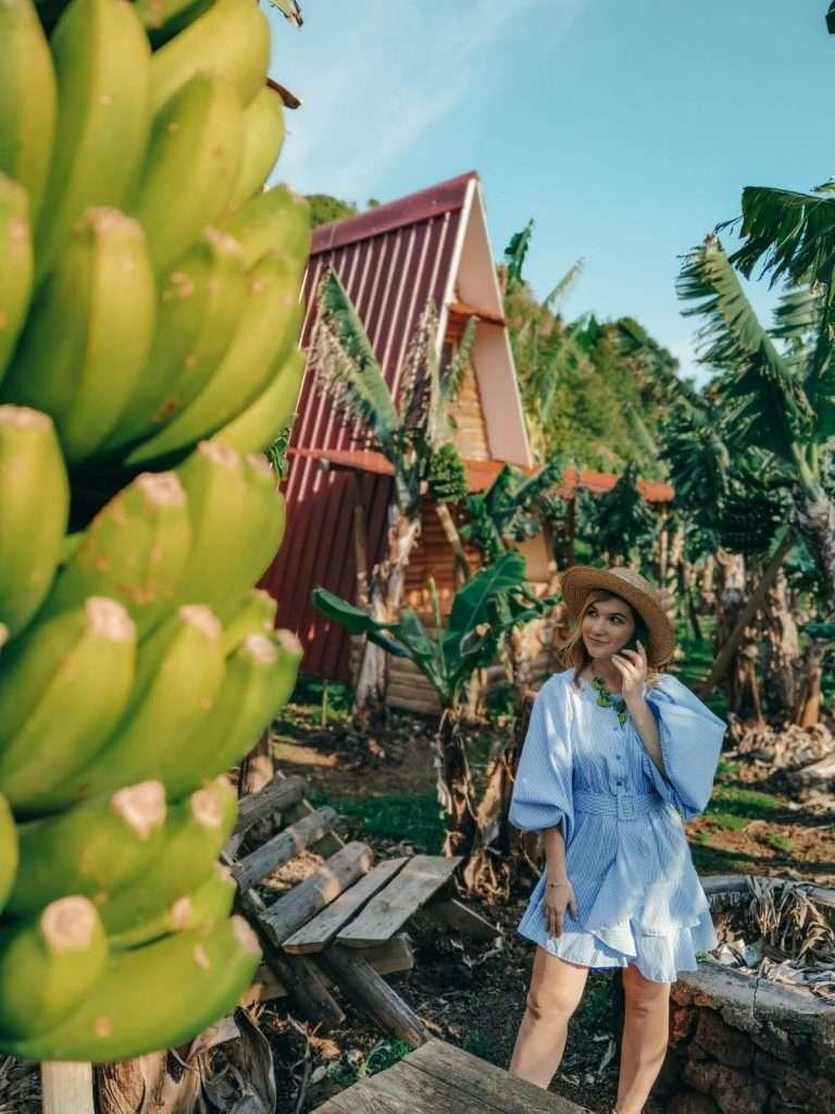alloggi insoliti alle Azzorre-banana-camp