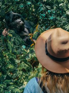 gorilla in Uganda-silver-back